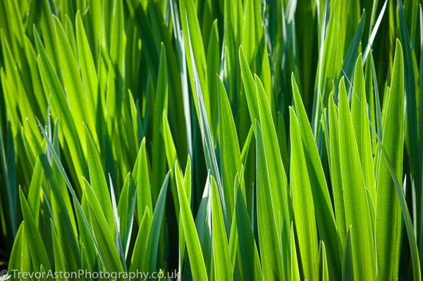 the-colour-green-Trevor-Aston-Photography-Richmond-Kingston-upon-Thames-53