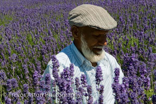 Lavender_picker_Kent