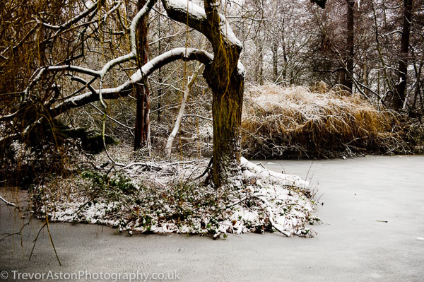 A-dusting-of-snow-Trevor-Aston-Photography-Kingston-Richmond-Surrey-London