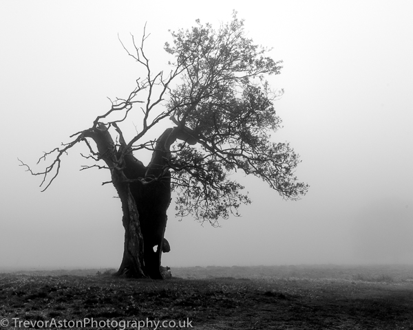Blasted-oak-in-freezing-fog-Trevor-Aston-Photography-Kingston-Richmond-Surrey-London