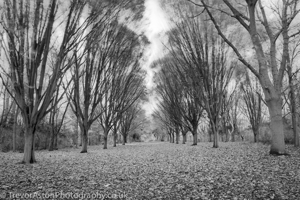 Bowing-boughs-in-the-winter-breeze-Trevor-Aston-Photography-Kingston-Richmond-Surrey-London