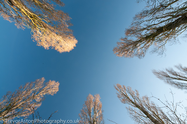 Reaching-up-for-the-winter-sun-Trevor-Aston-Photography-Kingston-Richmond-Surrey-London