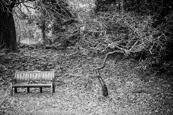 Small-tree-by-a-bench-Trevor-Aston-Photography-Kingston-Richmond-Surrey-London