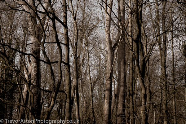 Tree-trunks-Trevor-Aston-Photography-Kingston-Richmond-Surrey-London